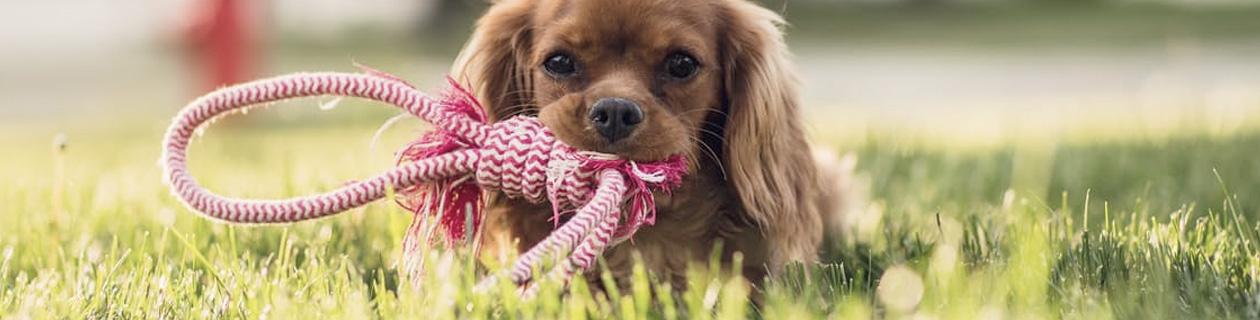 HundeLeinen - Leder, Biothane, Tau Leinen
